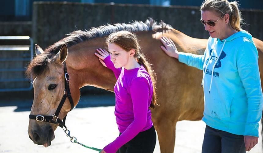 Horse & Pony Livery Kildare